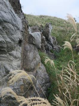 buddhasgrasses